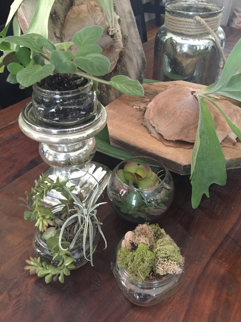 Dee's passion for introducing horticulture into interiors is displayed by her terrarium and green work.
